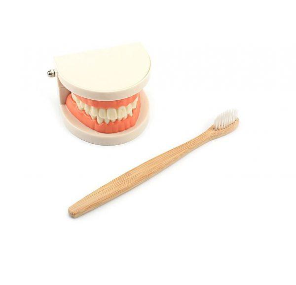 simulateur de dents avec plateau