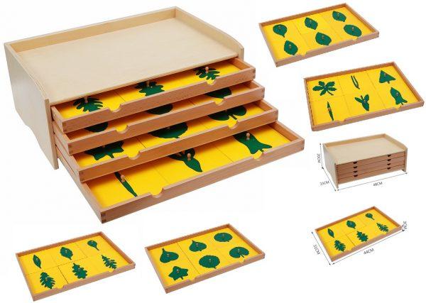 Cabinet Botanique en Bois